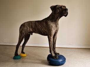 Balansträning är ett roligt sätt att träna med sin hund.