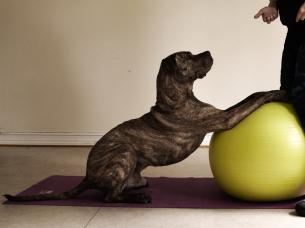 Det finns många sätt att träna med balansbollar.